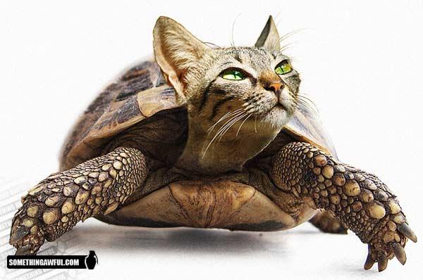 pet tortoise tank