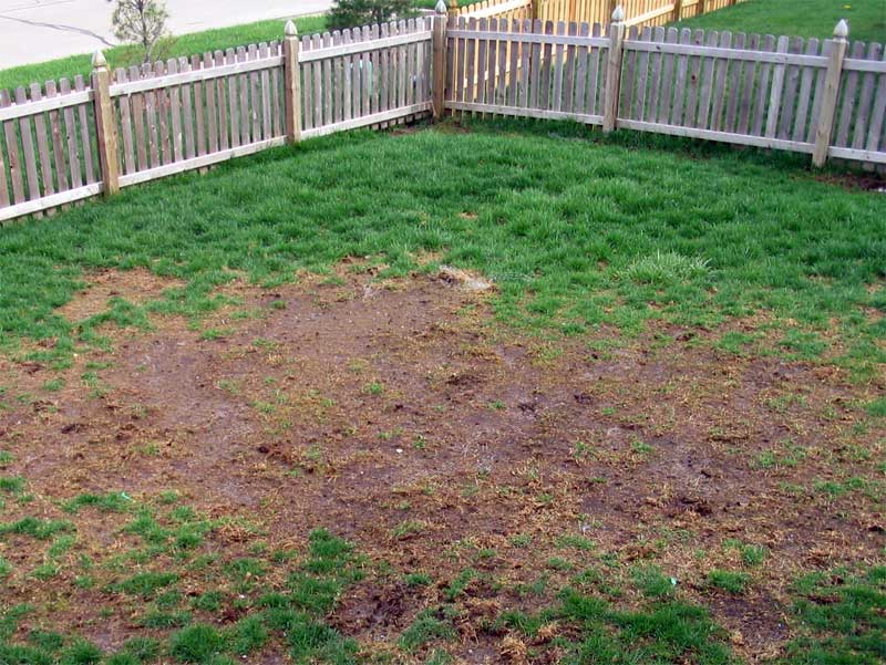 Lawn and yard.?