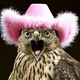 Hats for Birds!