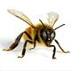 Stop Killing Bees, Moron