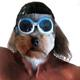 Dog-Faced Celebrities!