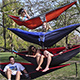 Invasive Species Warning: Campus Hammockers