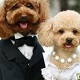 Dog Marriage!