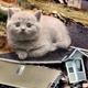 Pet Disasters!