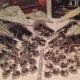 Board Game Article: Star Wars Armada Ship-Show