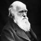 The Real Darwin Awards