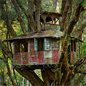 I'm Pretty Sure this Airbnb is Just a Treehouse