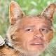 John Cena's Face Superimposed on Cats