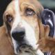 PHONE DOGS