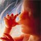 Utah Fetus Regulations