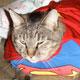 Dress Up Your Cat