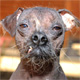 Confessions of a World's Ugliest Dog Owner