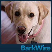 BarkWire.com Dog Reviews: Hope