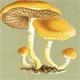 The Fifty Deadliest Mushrooms