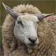 Keith's  Wool Tie Emporium