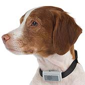 SkyMall Product Review: Bark Deterring Ultrasonic Collar
