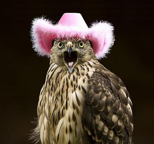 hats for birds