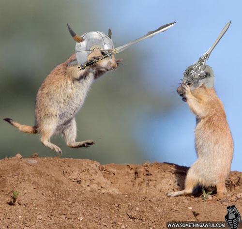 Cute Animals Fighting