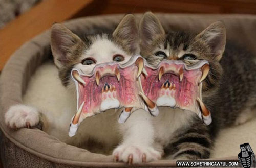 Scary Dogs And Cats