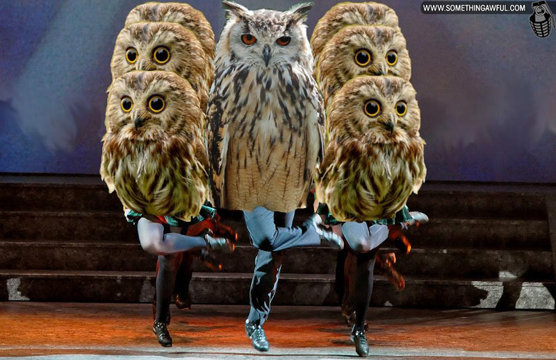 Owls with Human Legs!
