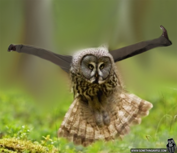 owls with human legs