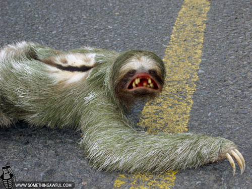 Sloth Teeth | www.pixshark.com - Images Galleries With A Bite!