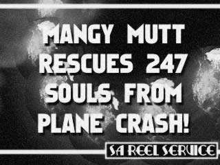 Mangy Mutt Rescues 247 Souls From Plane Crash!